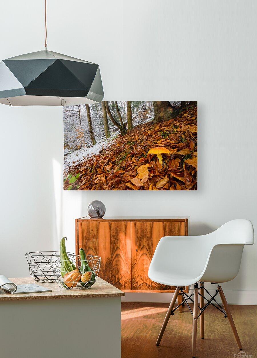 Mushroom ap 1576  HD Metal print with Floating Frame on Back