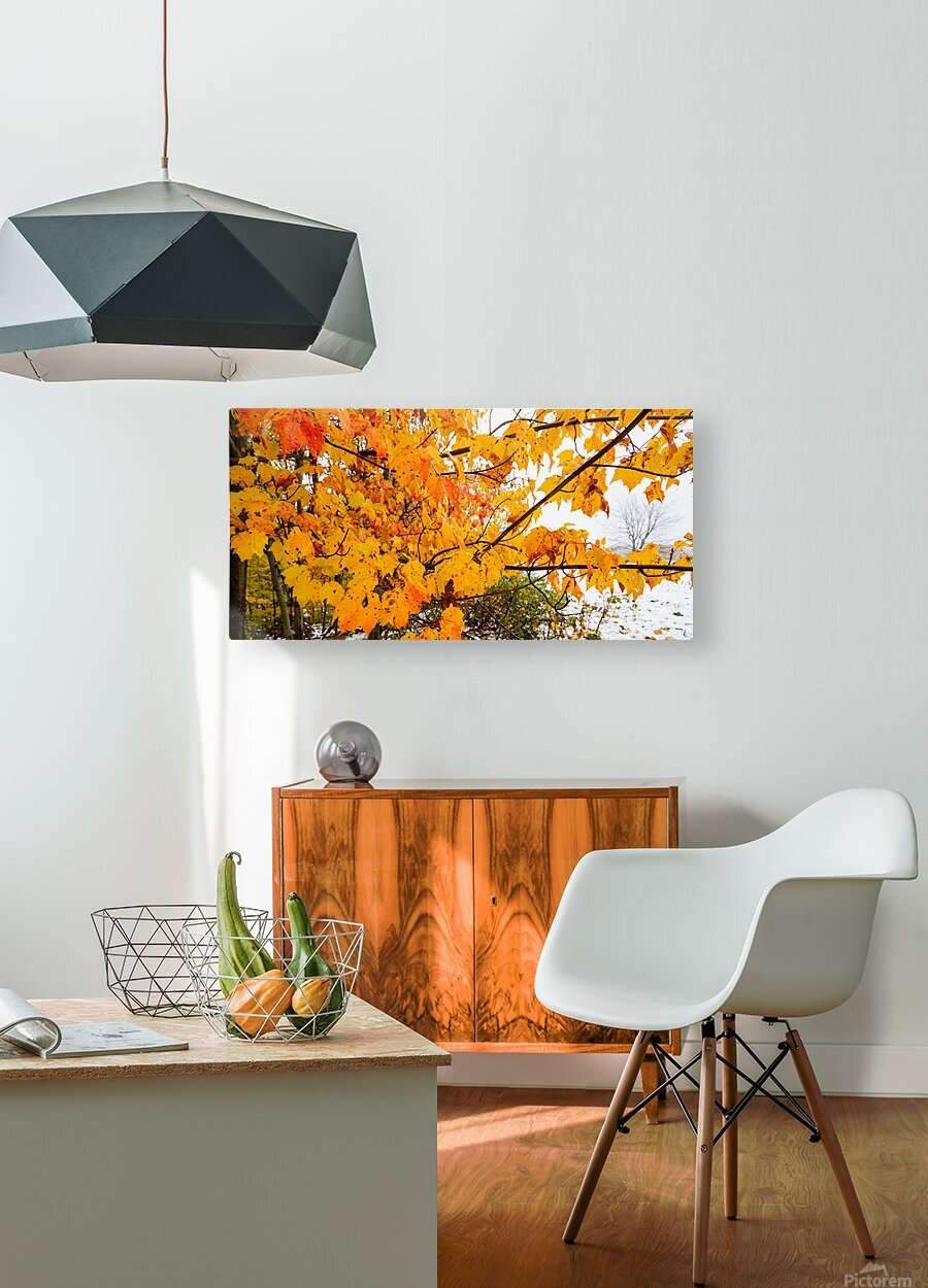 Maple Leaves ap 1589  HD Metal print with Floating Frame on Back