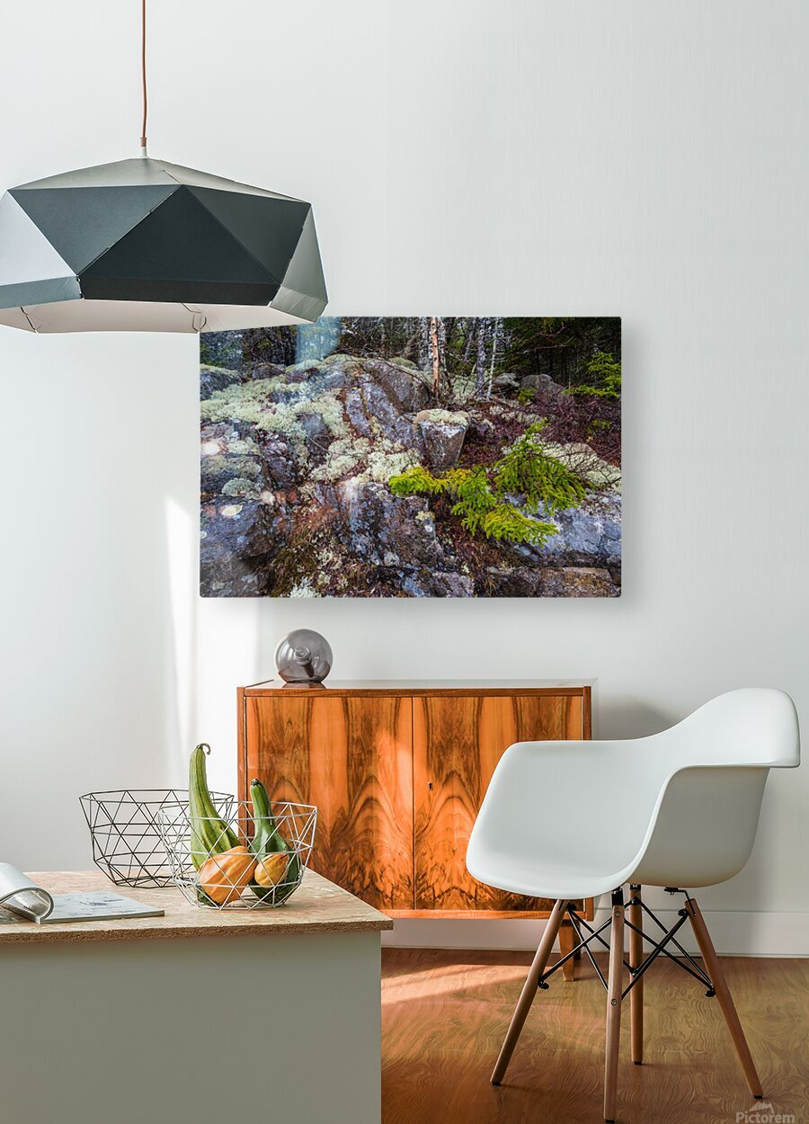 Moss   Lichen ap 2294  HD Metal print with Floating Frame on Back