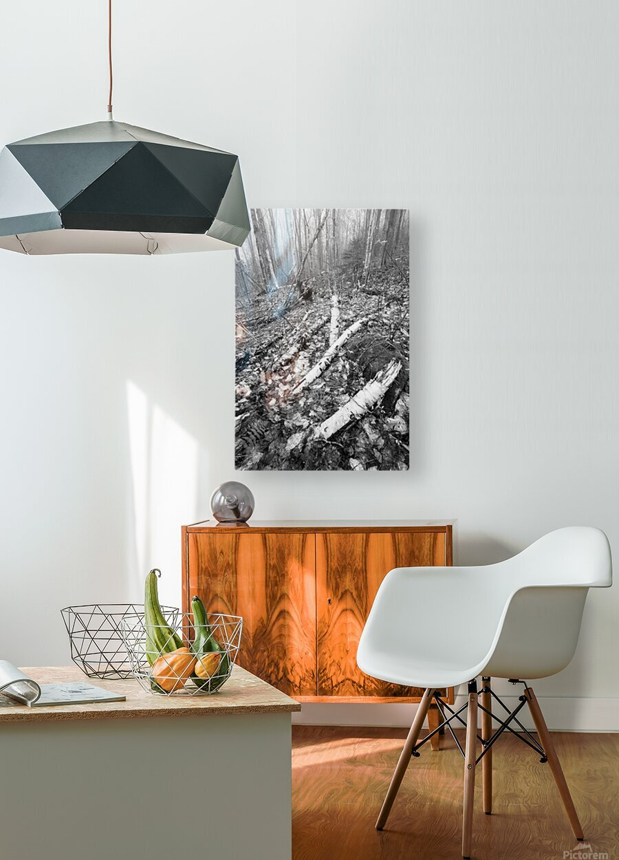White Birch ap 2186 B&W  HD Metal print with Floating Frame on Back