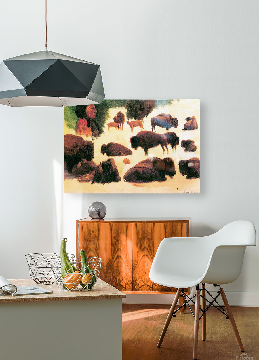 Study of Buffaloes by Bierstadt  HD Metal print with Floating Frame on Back