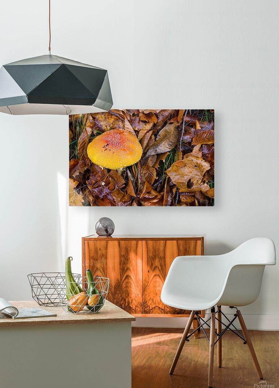 Mushroom ap 1579  HD Metal print with Floating Frame on Back