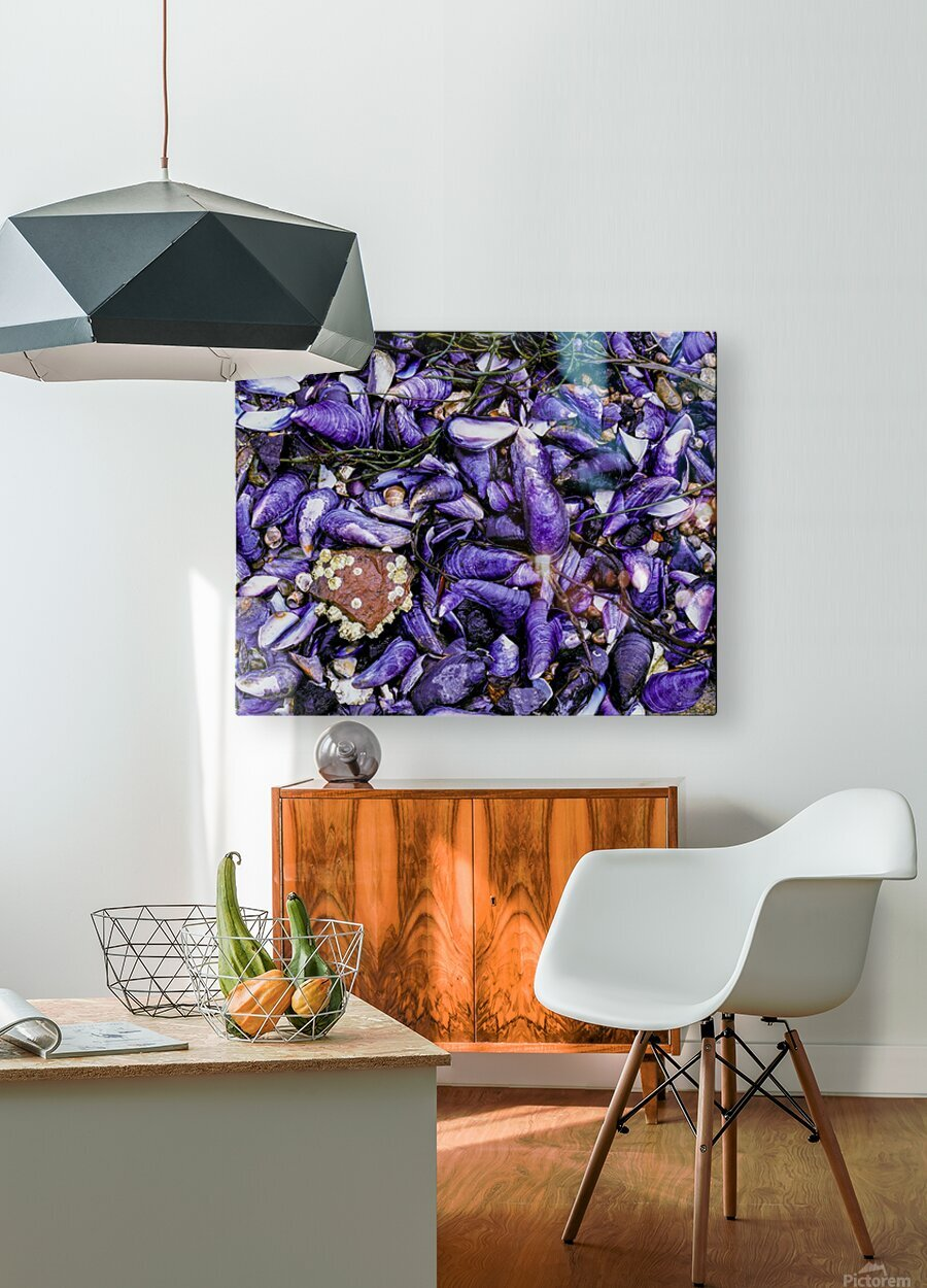 Shells ap 1519  HD Metal print with Floating Frame on Back