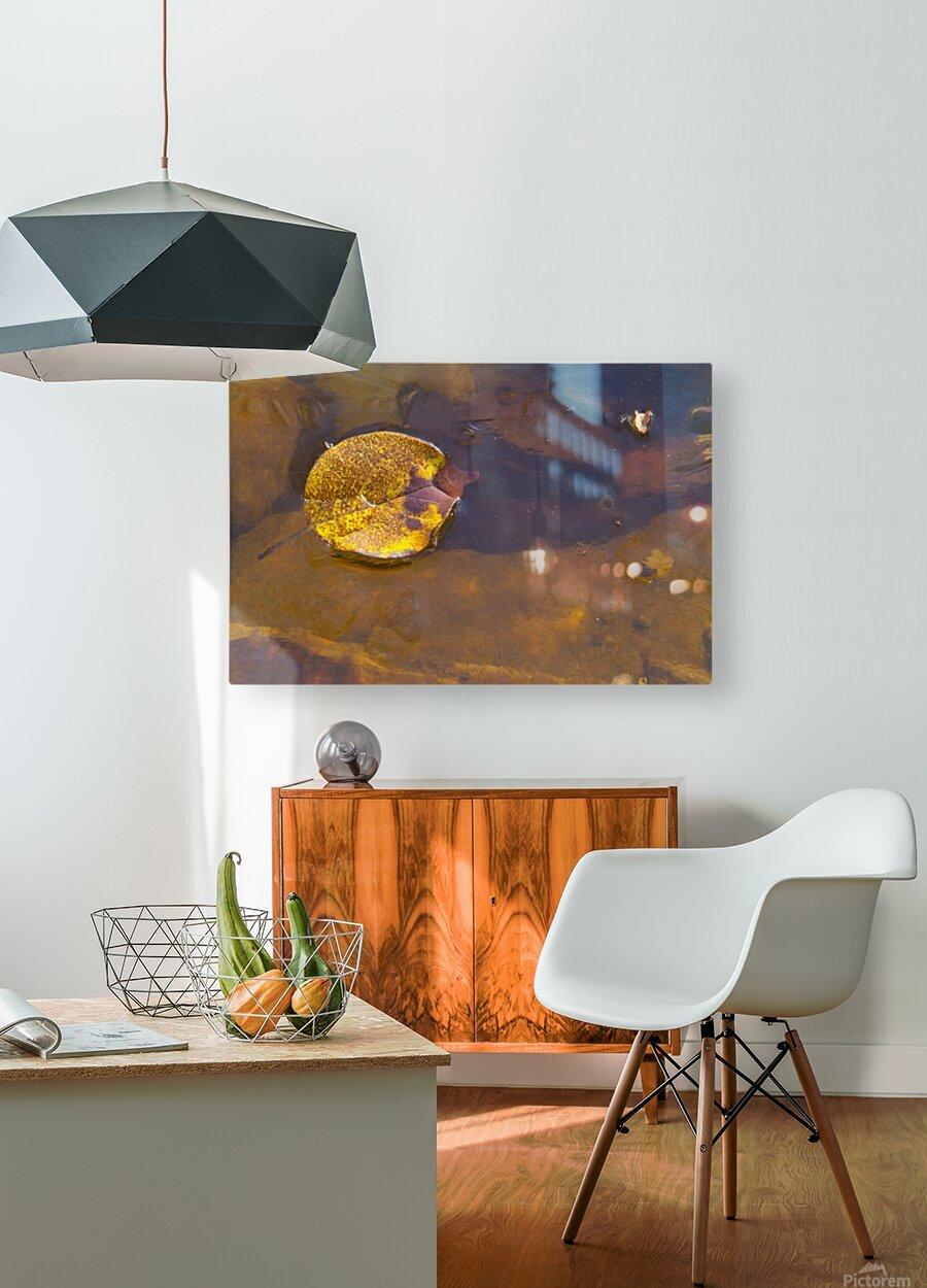 Witch Hazel Leaf ap 1811  HD Metal print with Floating Frame on Back