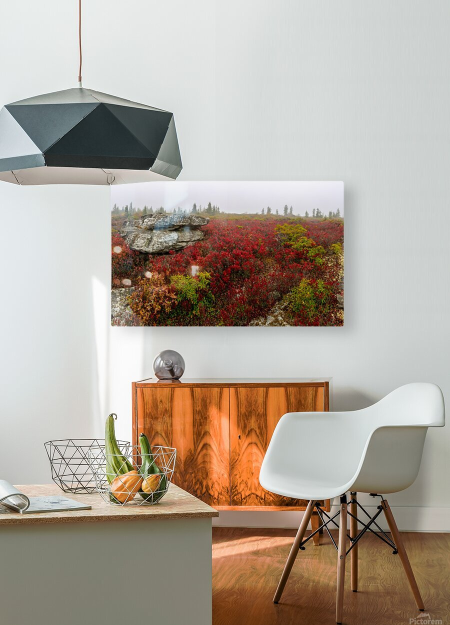 Alpine Tundra apmi 1812  HD Metal print with Floating Frame on Back