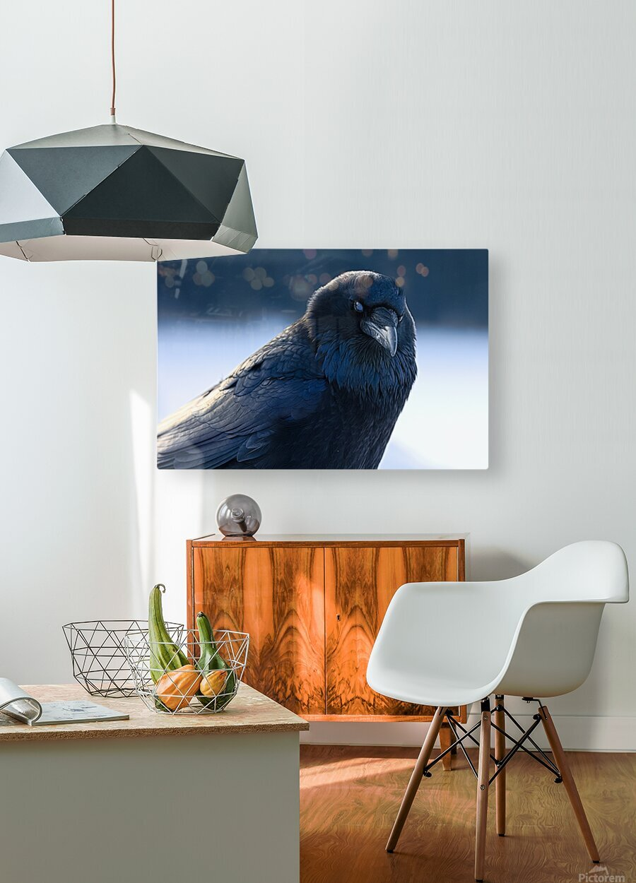 Raven  HD Metal print with Floating Frame on Back