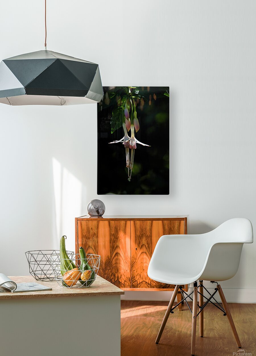Gently Hanging  HD Metal print with Floating Frame on Back