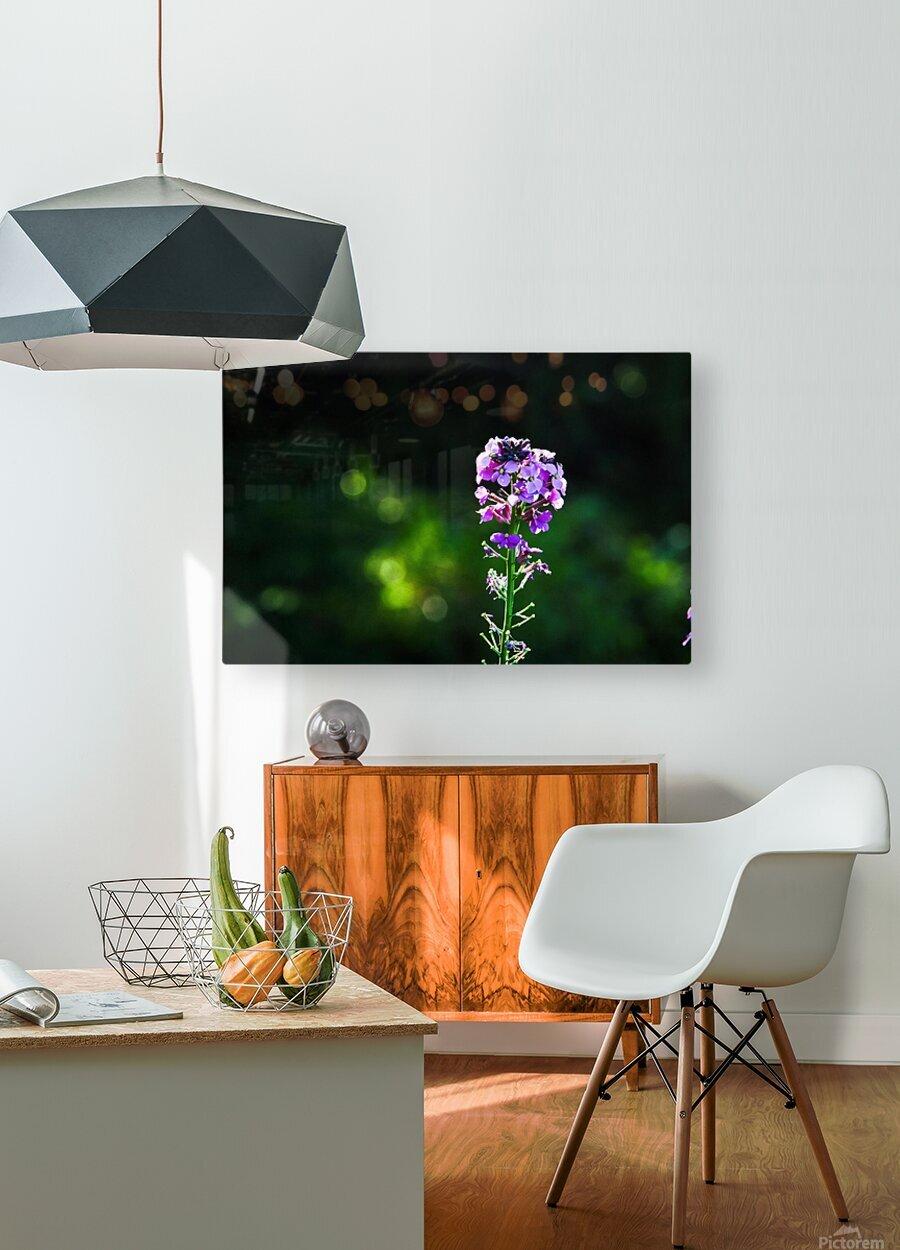 Royal Flower  HD Metal print with Floating Frame on Back