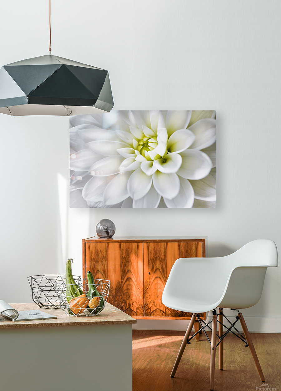 White Dahlia  HD Metal print with Floating Frame on Back