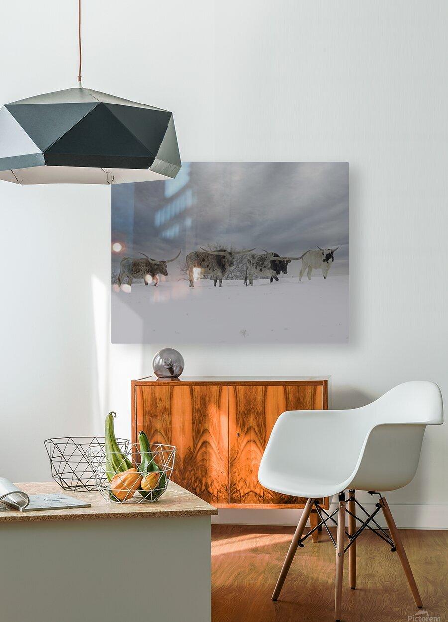 Longhorns  HD Metal print with Floating Frame on Back