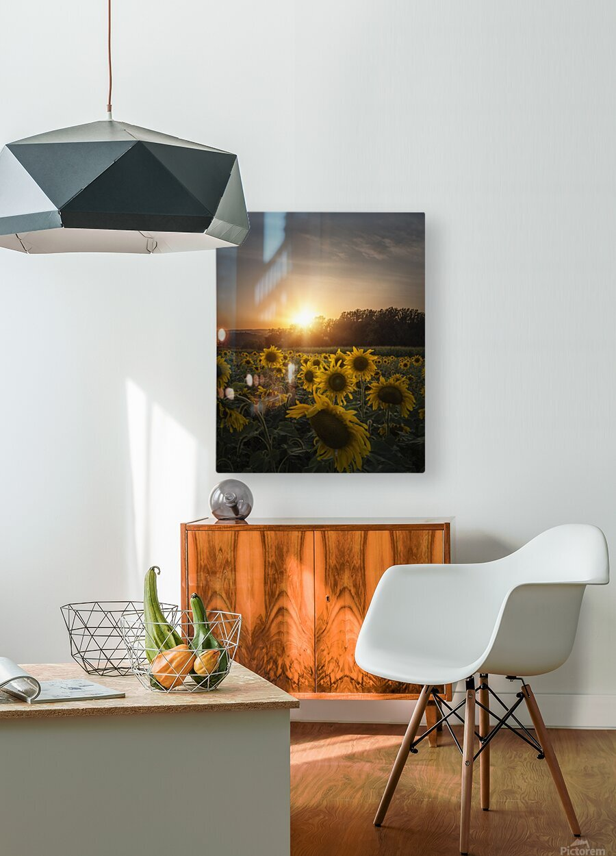 Sunflower Sunset  HD Metal print with Floating Frame on Back
