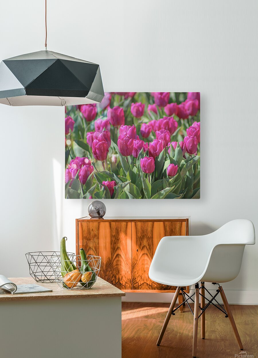 Fantasically Fuschia Tulips  HD Metal print with Floating Frame on Back