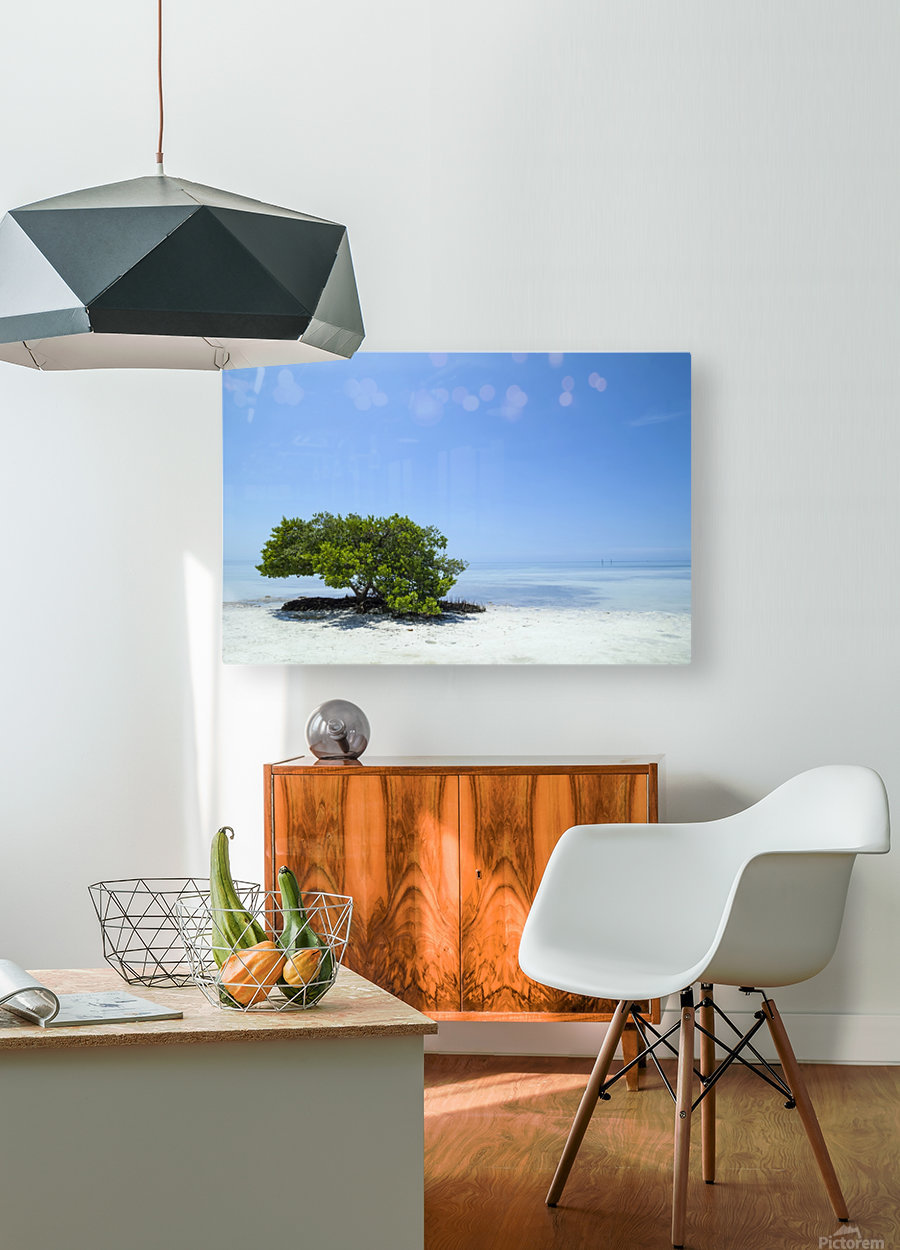 FLORIDA KEYS Lonely Tree  HD Metal print with Floating Frame on Back