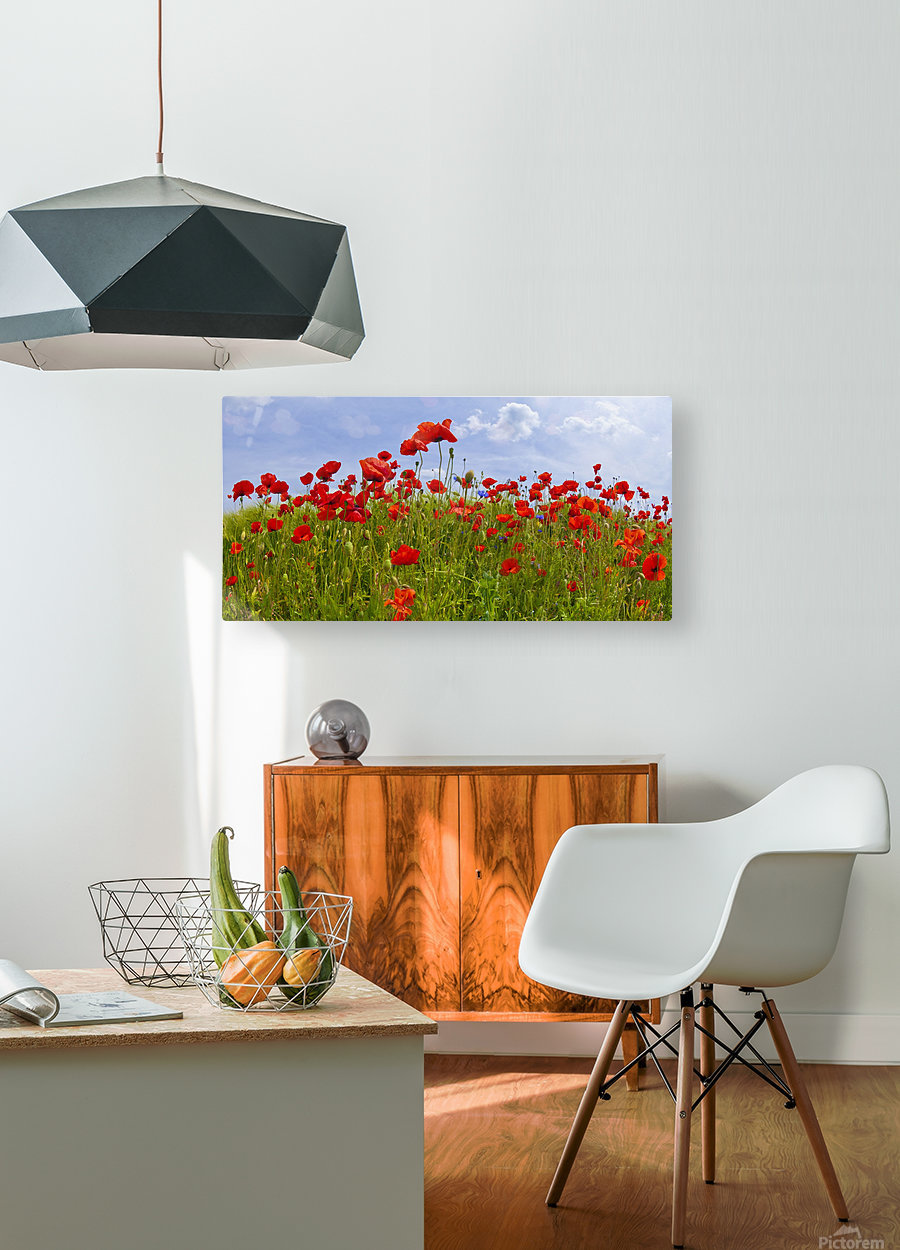 Field of Red Poppies  HD Metal print with Floating Frame on Back
