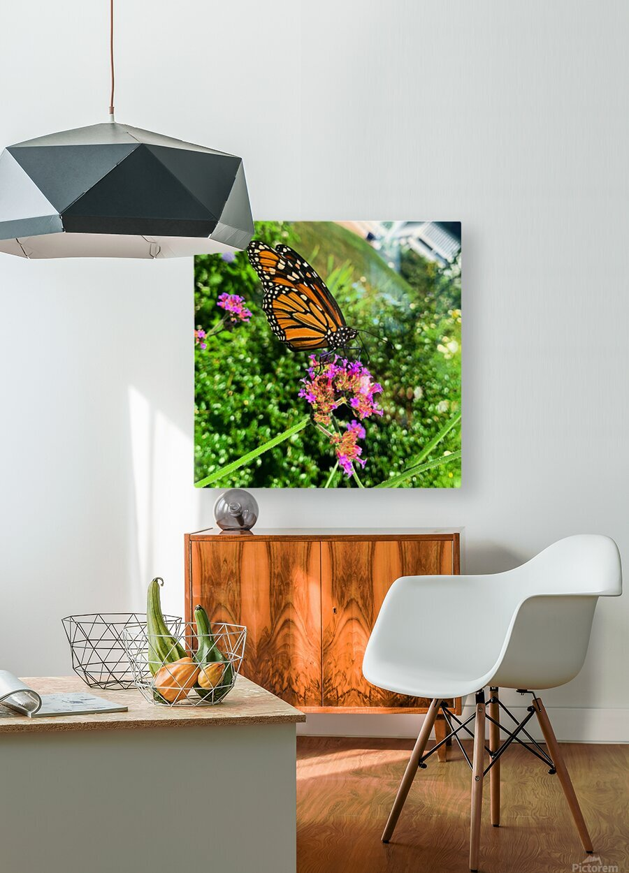 Butterfly Bliss   HD Metal print with Floating Frame on Back