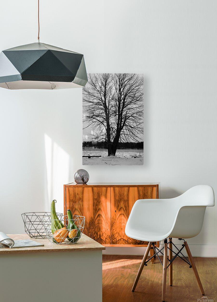 L'arbre de vie  Impression métal HD avec cadre flottant sur le dos