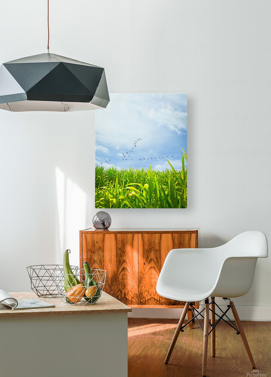 Midsummer Cornfield  HD Metal print with Floating Frame on Back