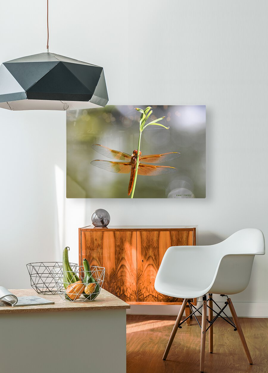 PEEK-A-BOO  Collection 1-4  HD Metal print with Floating Frame on Back