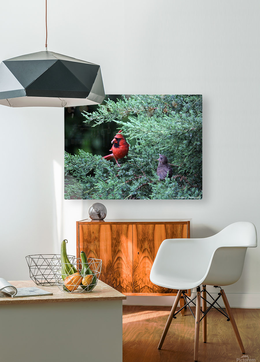 cardinal dad feed5  HD Metal print with Floating Frame on Back