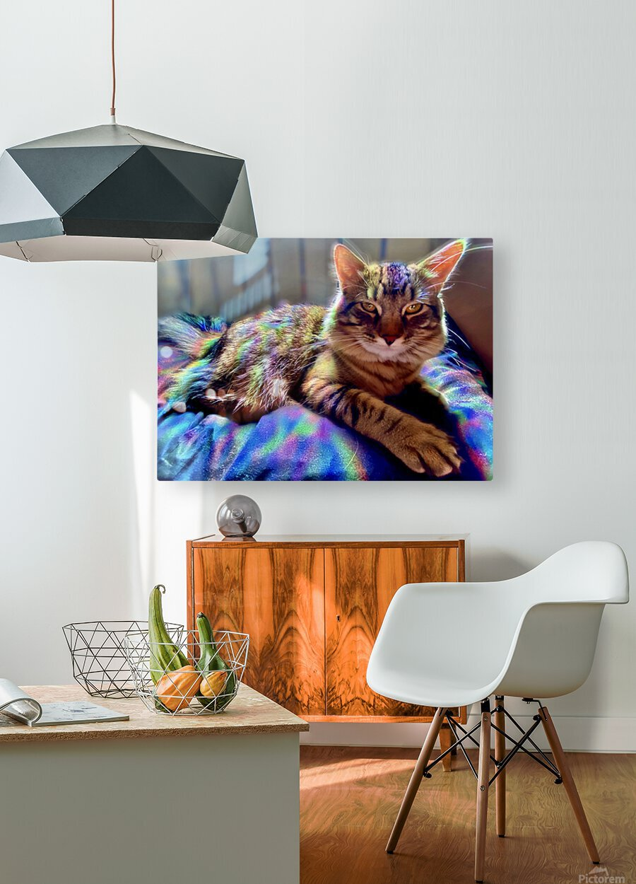 Rainbow Kitten Surprise   HD Metal print with Floating Frame on Back