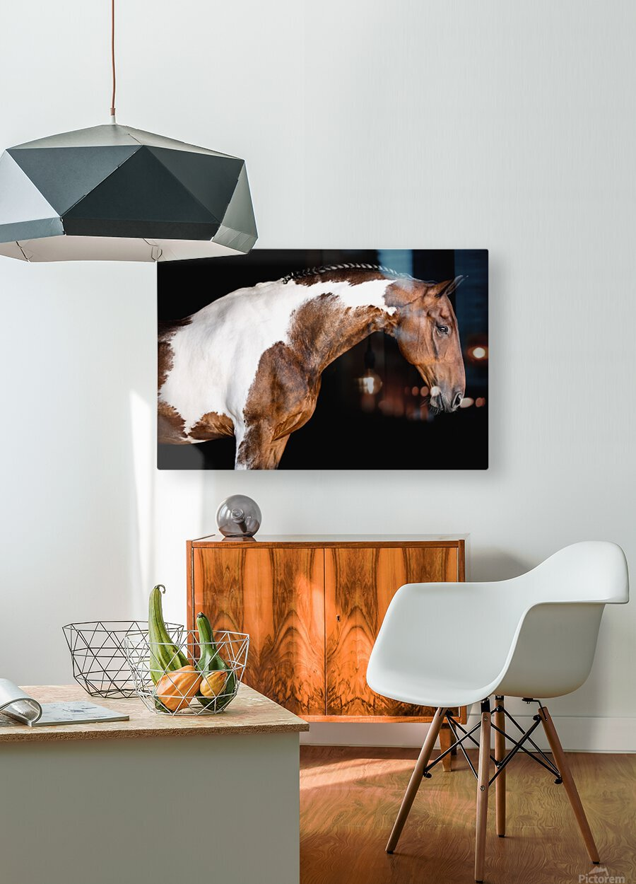 Paint Horse Portrait - Comanche  HD Metal print with Floating Frame on Back