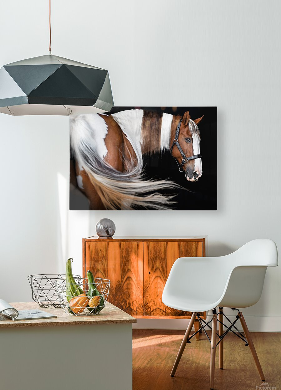 Paint Horse Portrait  HD Metal print with Floating Frame on Back