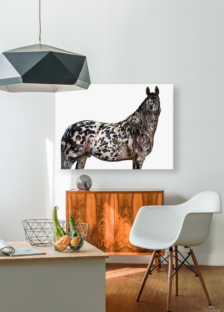 Spotted Horse Portrait  HD Metal print with Floating Frame on Back