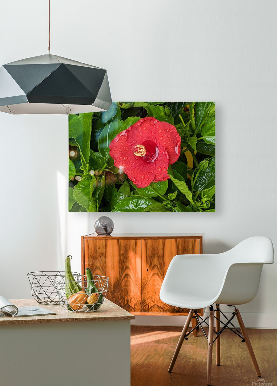 Rain & Nature  HD Metal print with Floating Frame on Back