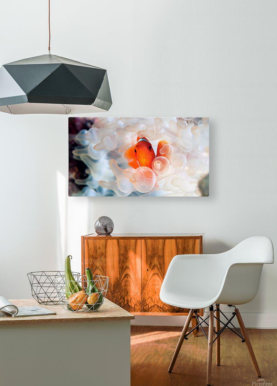 Peek A Boo  HD Metal print with Floating Frame on Back