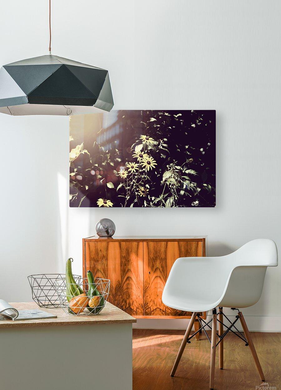 Shine On Me  HD Metal print with Floating Frame on Back