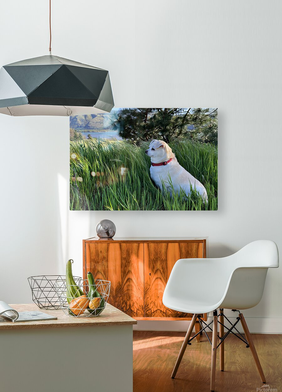 Blossom in Tall Grass  HD Metal print with Floating Frame on Back