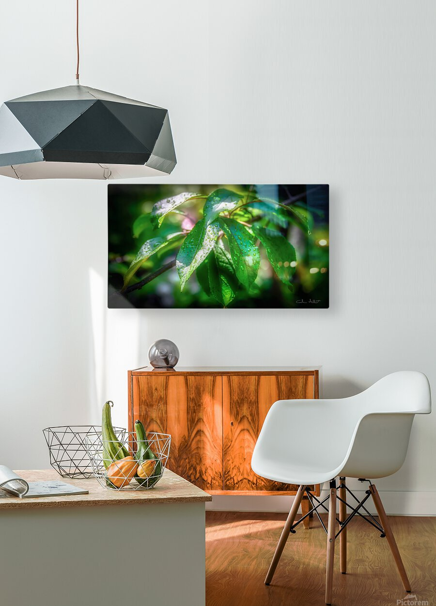 Rosee du matin  HD Metal print with Floating Frame on Back