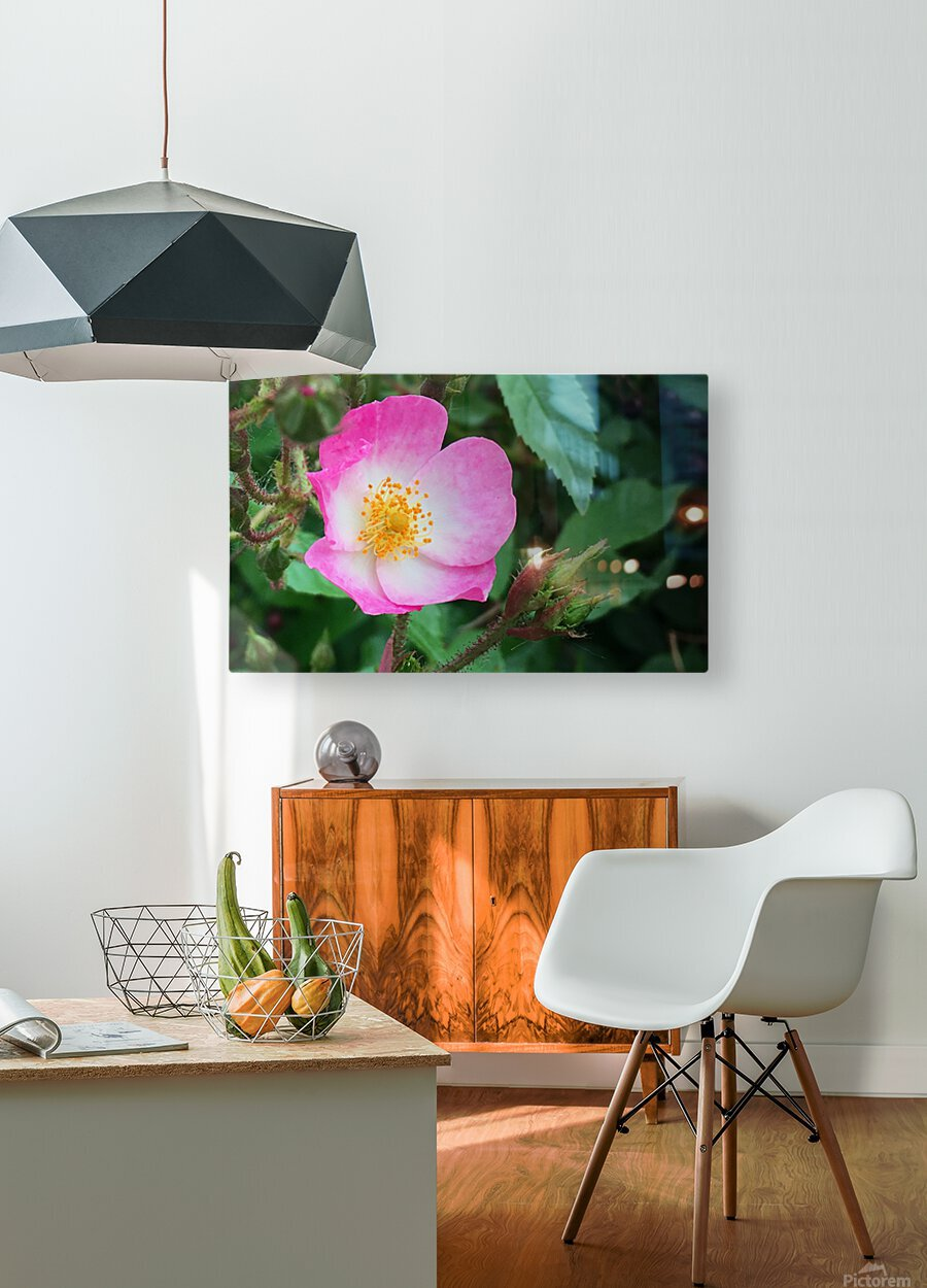 The Bloom  HD Metal print with Floating Frame on Back