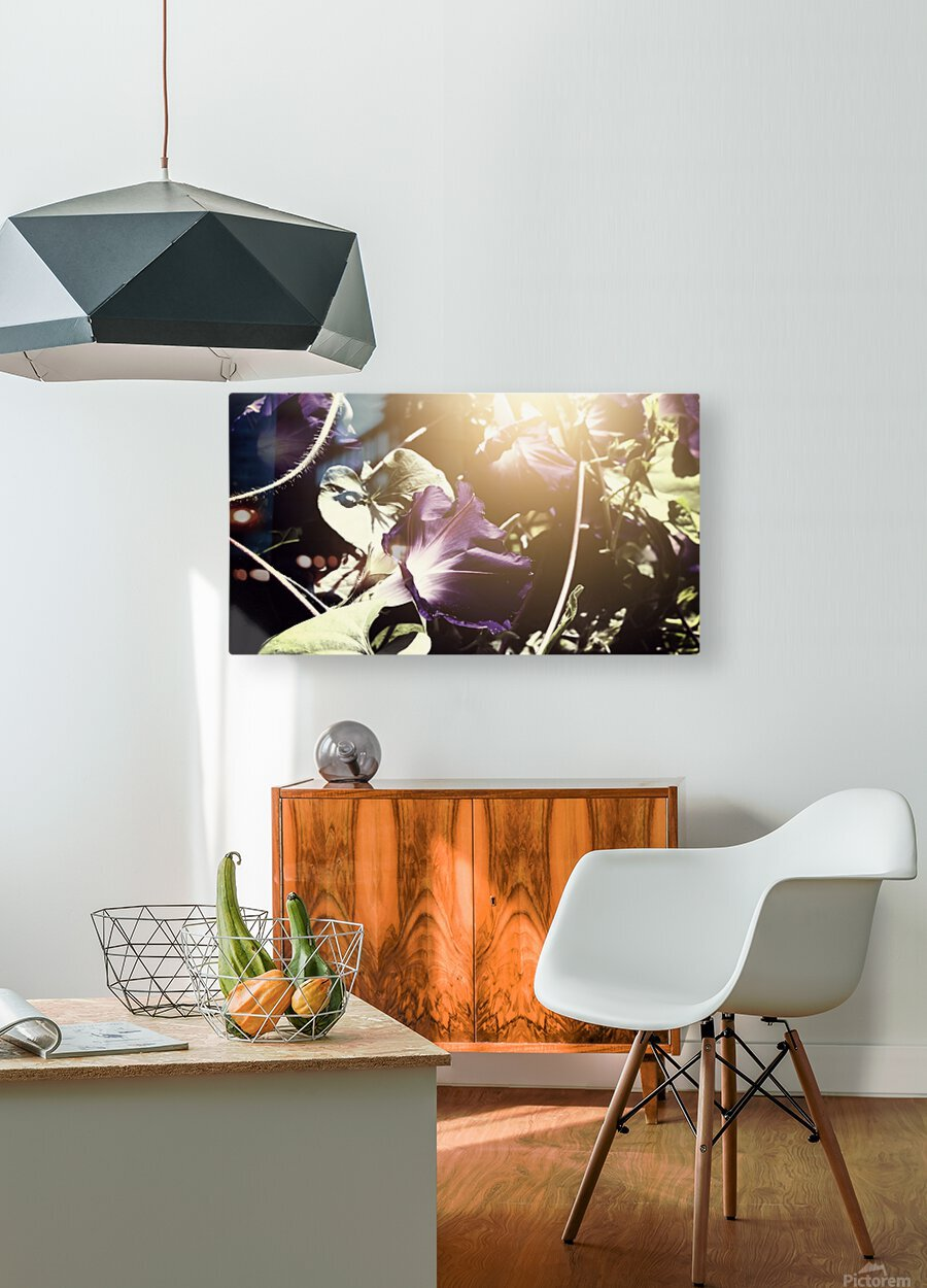 Morning Sun  HD Metal print with Floating Frame on Back