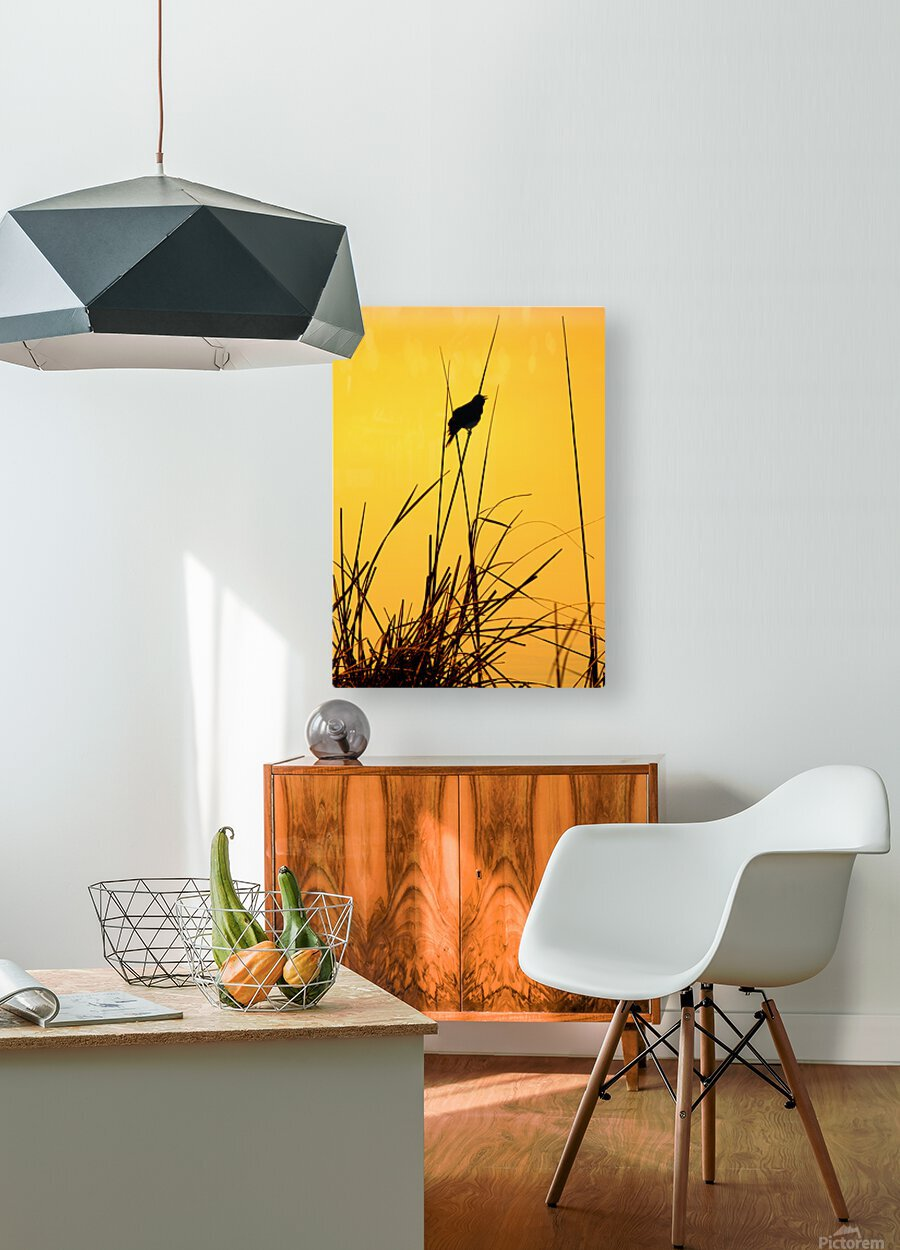 Song of First Light   HD Metal print with Floating Frame on Back