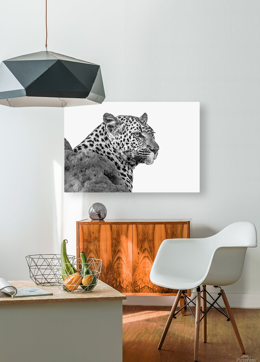 Leopard - B&W  HD Metal print with Floating Frame on Back