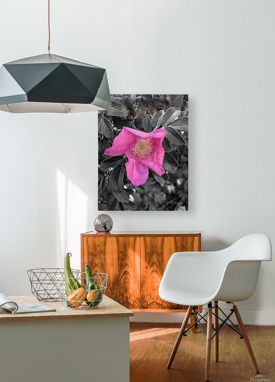 BlackPinkLove  HD Metal print with Floating Frame on Back