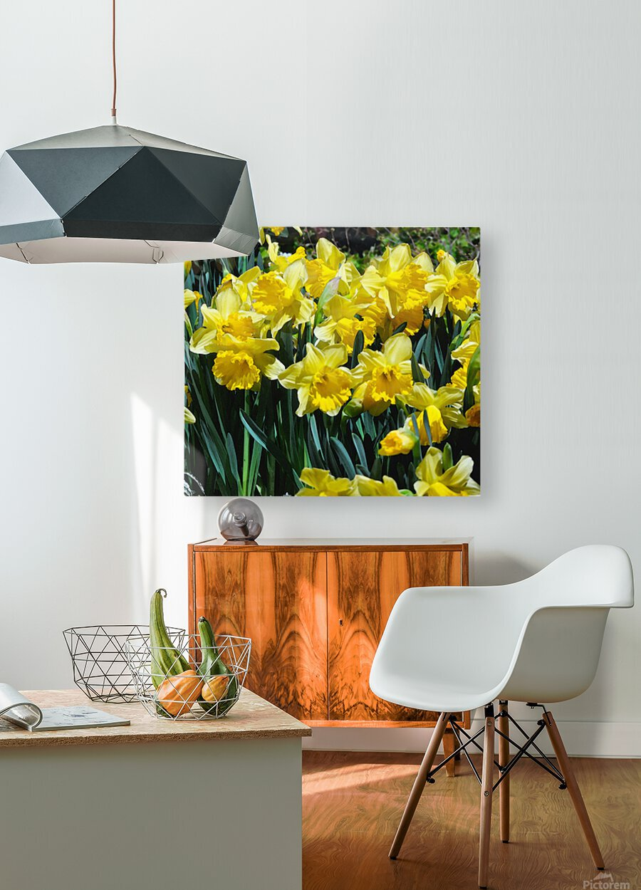 Yellow Daffodils wc  HD Metal print with Floating Frame on Back