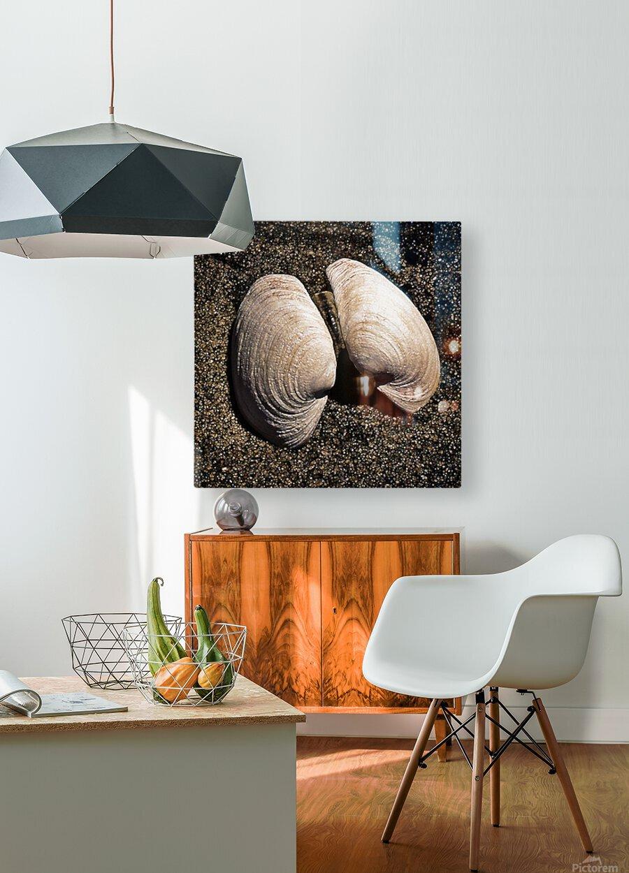 Seashells  HD Metal print with Floating Frame on Back