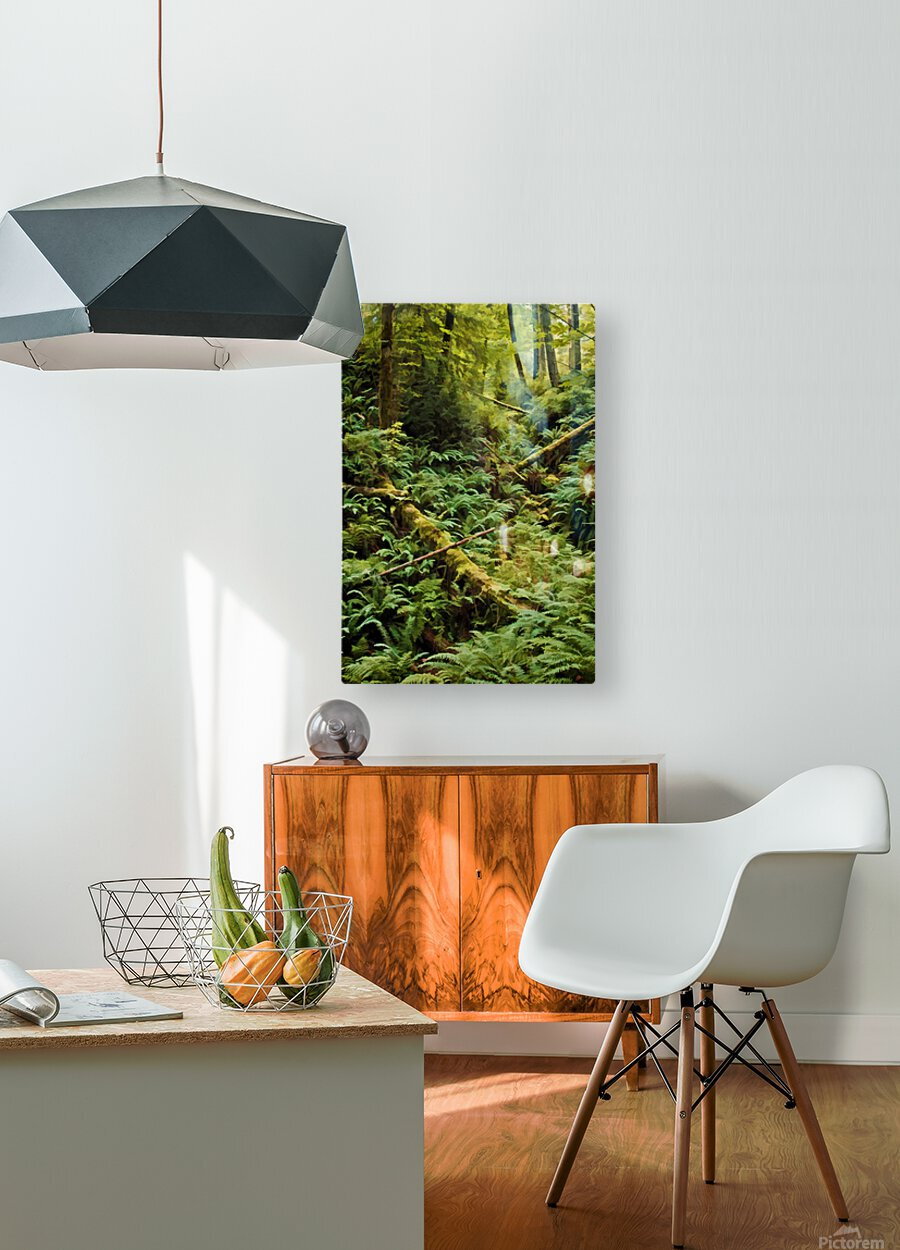 Fern Hollow  HD Metal print with Floating Frame on Back