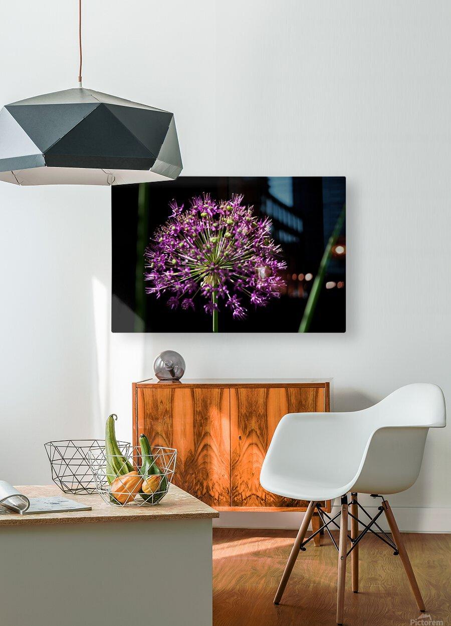 Purple Allium  HD Metal print with Floating Frame on Back