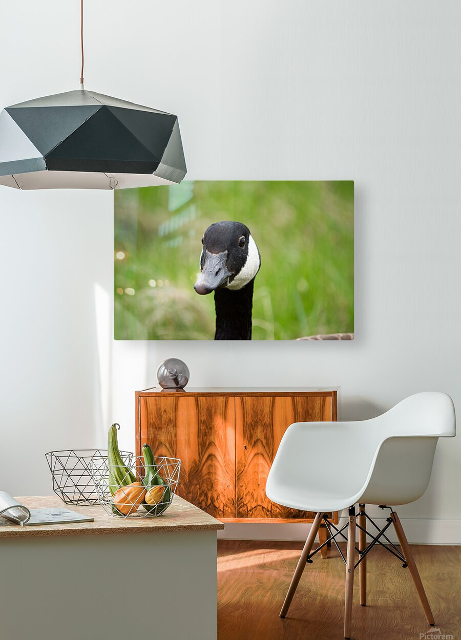 Toothpick Goose  HD Metal print with Floating Frame on Back