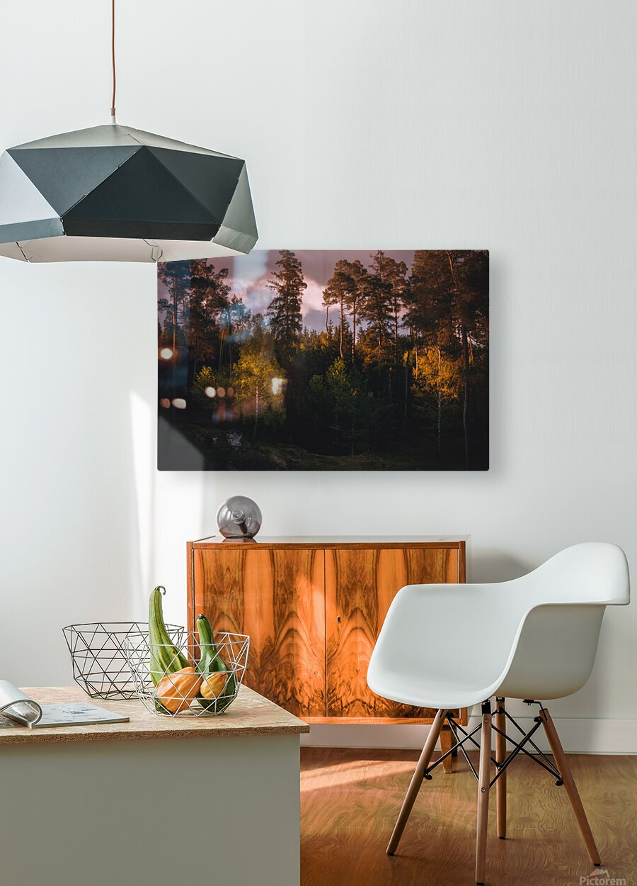 Morning forest  HD Metal print with Floating Frame on Back