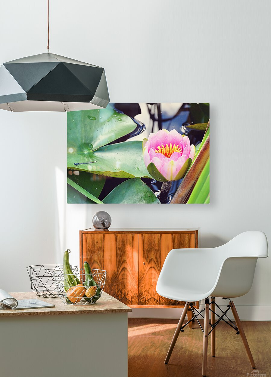 Dragonfly And Lily  HD Metal print with Floating Frame on Back