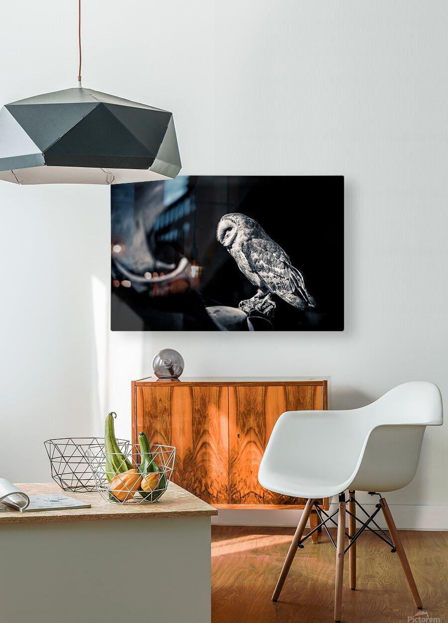 Barn owl  HD Metal print with Floating Frame on Back