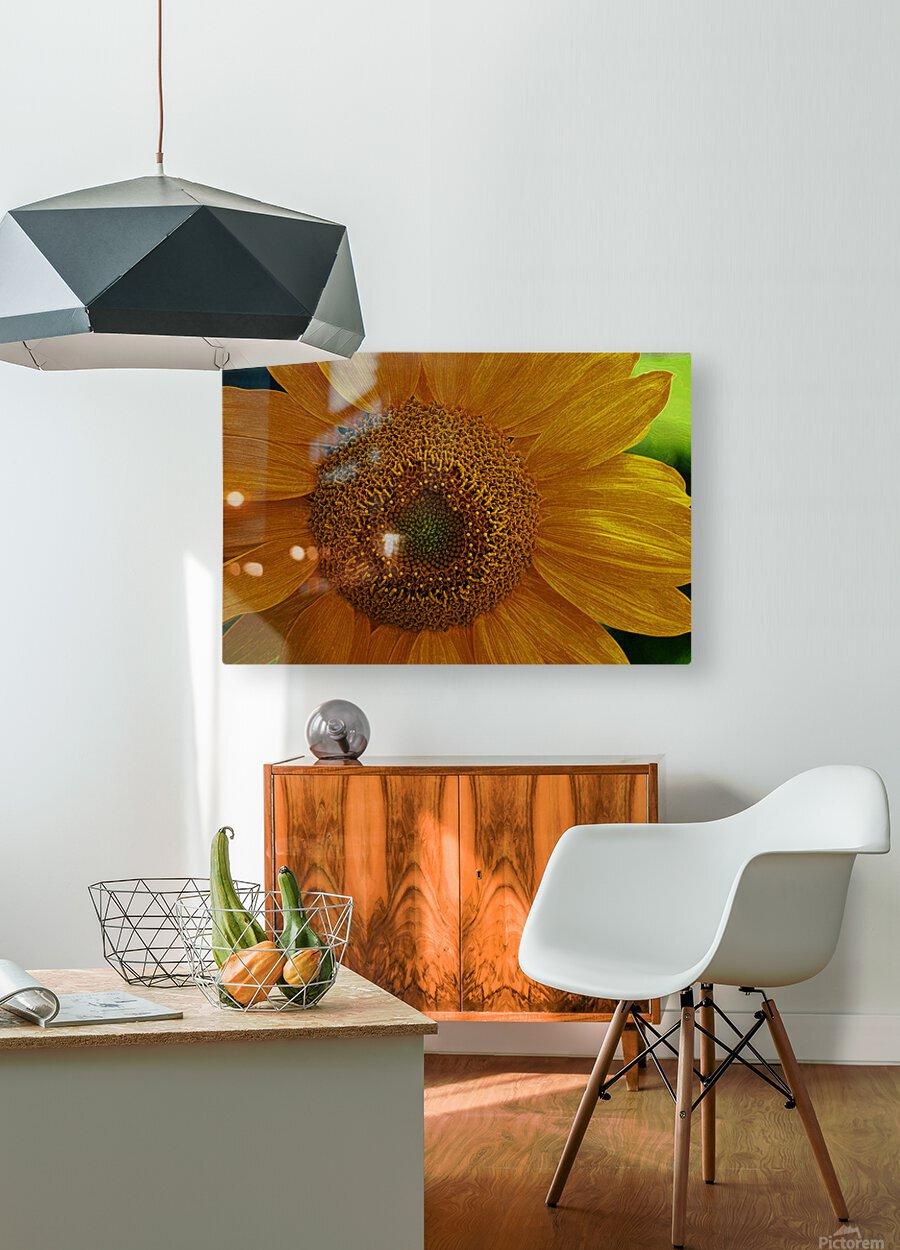 Enhanced Sunflower  HD Metal print with Floating Frame on Back