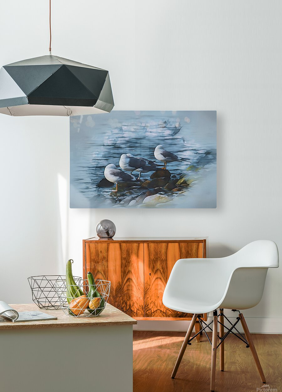 Preening Gulls  HD Metal print with Floating Frame on Back