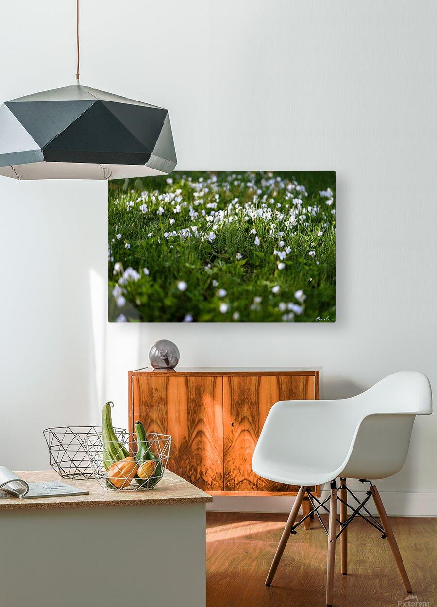 Confettis au jardin 3  HD Metal print with Floating Frame on Back