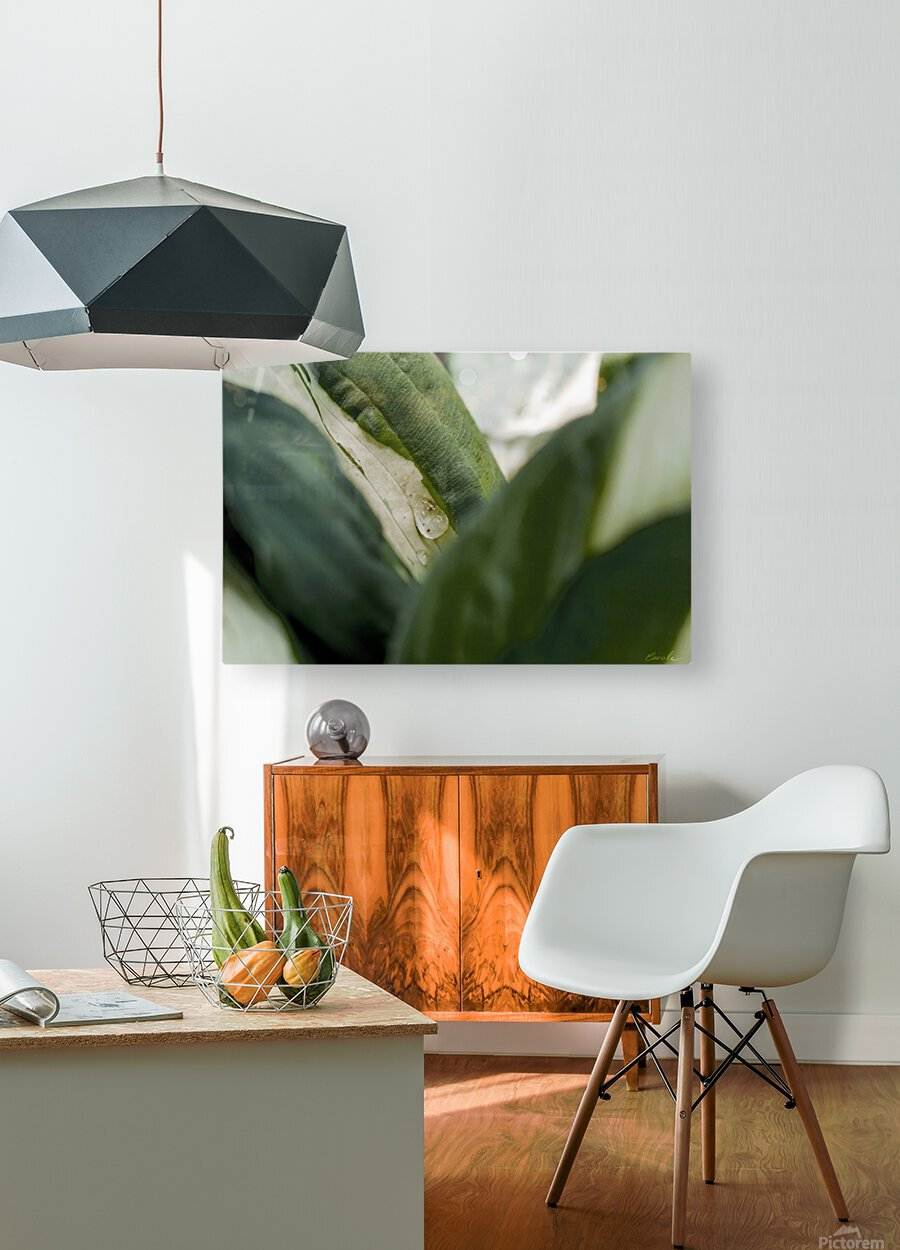 Une larme de hosta   HD Metal print with Floating Frame on Back