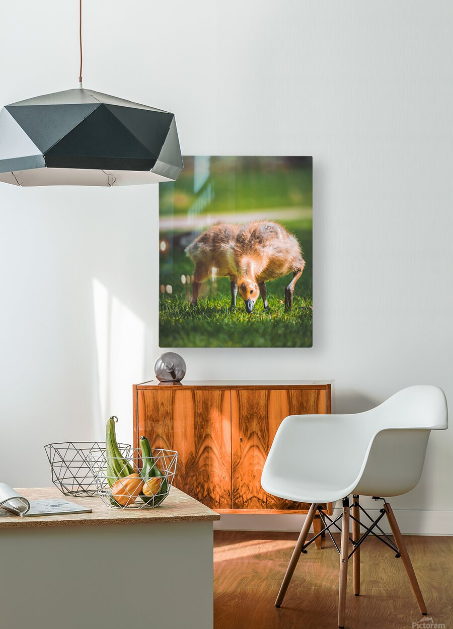 Gooses   HD Metal print with Floating Frame on Back